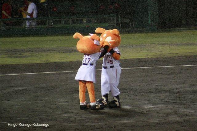 Gifu28
