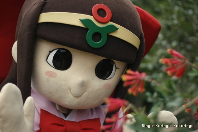Katsuragi6